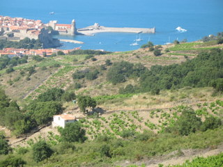 collioure_vineyards.JPG
